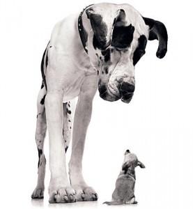 big_dog_little_dog